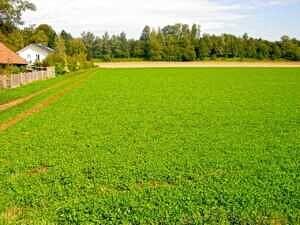 Feld am Ortsrand von Poing