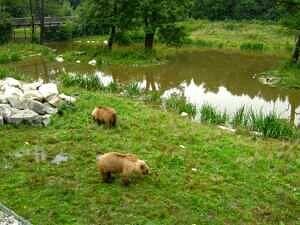 Bärengehege im Wildpark Poing